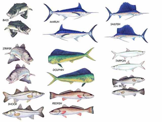 FISH DECAL TWIN PACKS